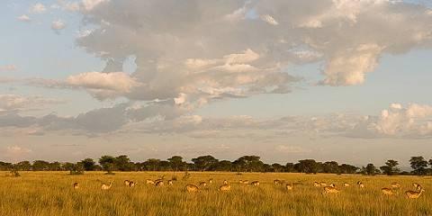 3-Day Comfortable Safari for Children