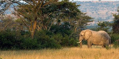 5-Day Explore Untouched Wilderness of Kidepo Valley NP