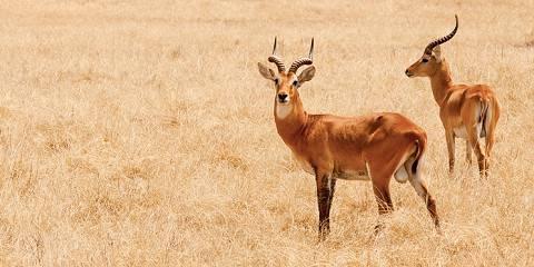 3-Day Best of Wildlife Tour in Queen Elizabeth Park