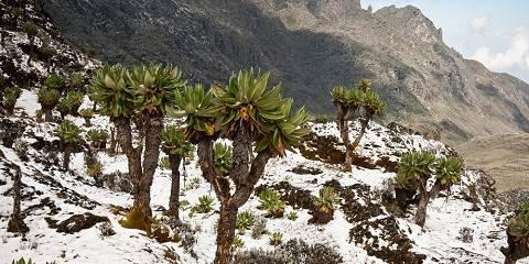 9-Day Mount Rwenzori Climbing