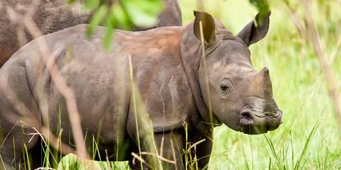 3-Day Murchison Falls & Ziwa Sanctuary - Safari Van