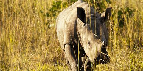 3-Day Rhino Tracking and Murchison Falls Adventure