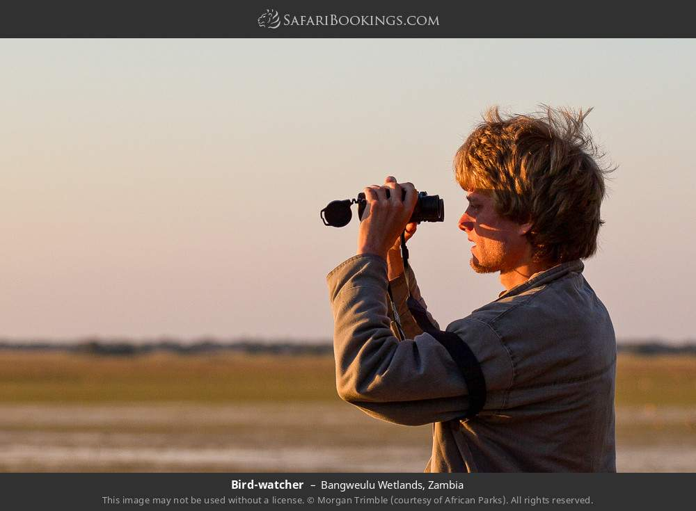 Birdwatcher in Bangweulu Wetlands, Zambia