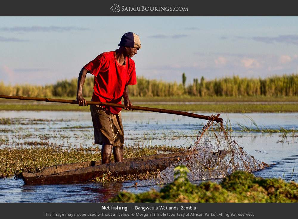 Net fishing in Bangweulu Wetlands, Zambia
