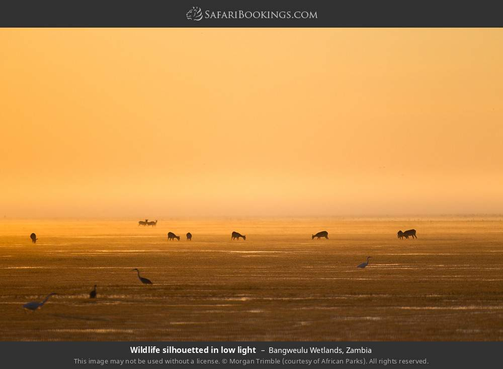 Wildlife silhouetted in low light in Bangweulu Wetlands, Zambia
