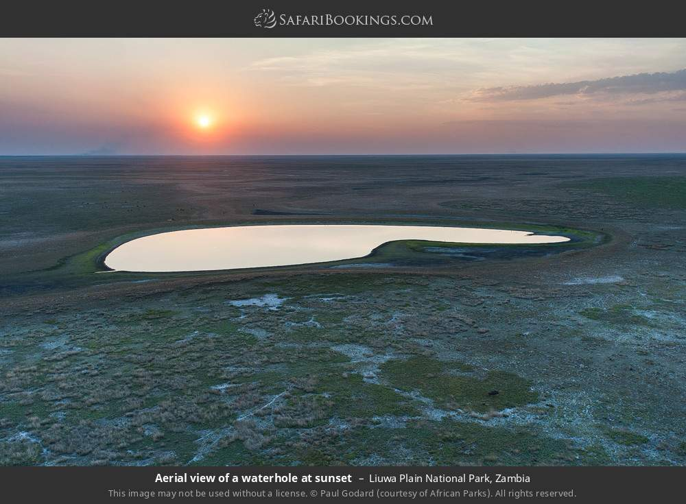 Aerial view of a waterhole at sunset in Liuwa Plain National Park, Zambia