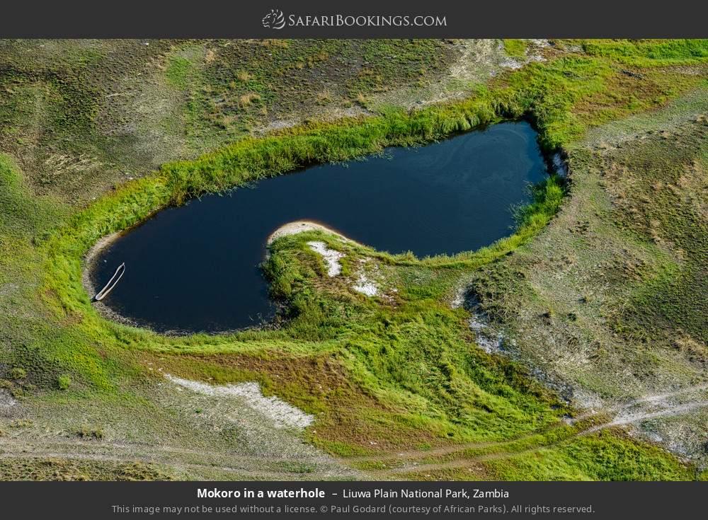 Mokoro in a waterhole in Liuwa Plain National Park, Zambia
