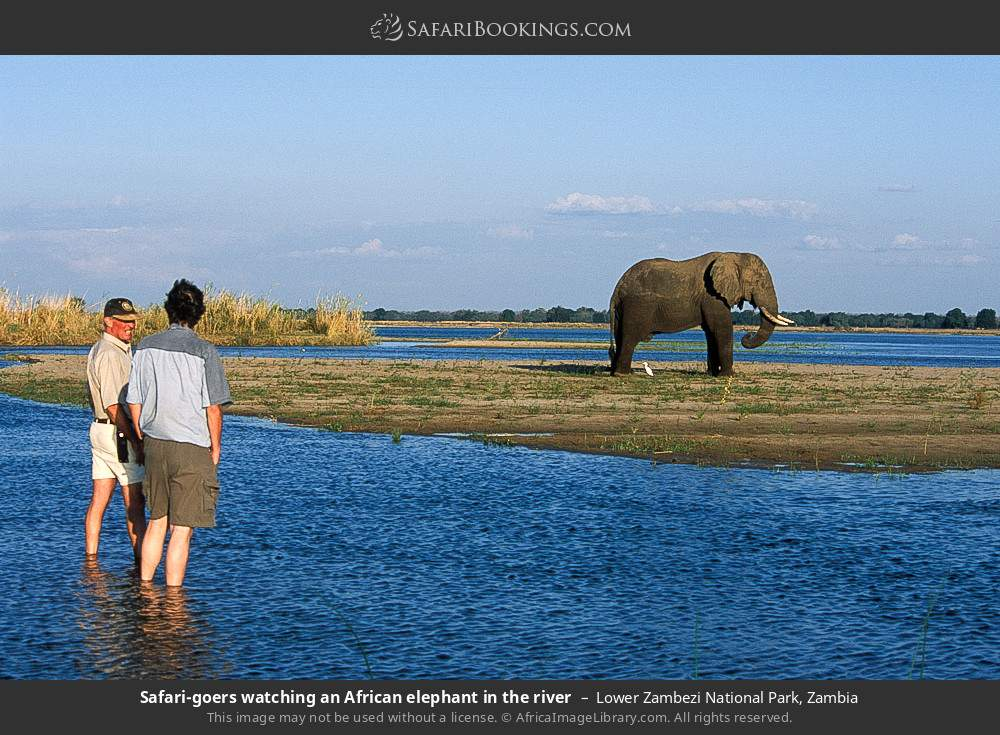 Tourists watching an African elephant in the river in Lower Zambezi National Park, Zambia