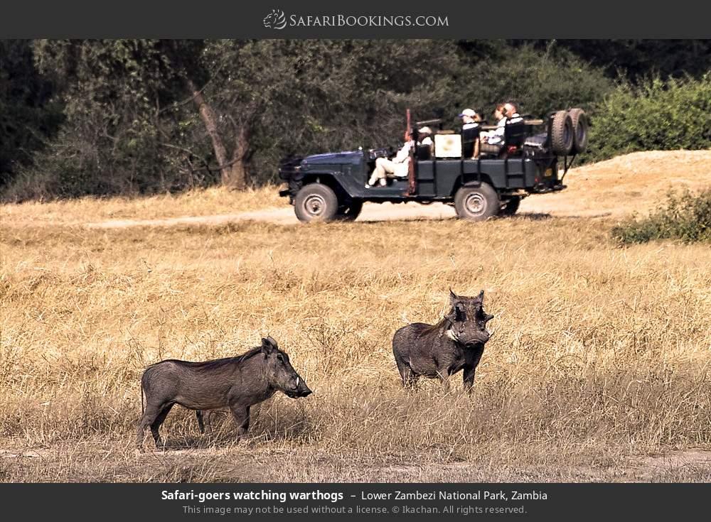 Safari-goers watching warthogs in Lower Zambezi National Park, Zambia