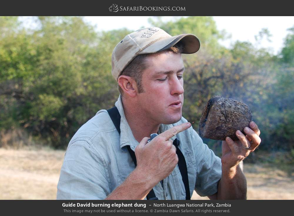 Guide David burning elephant dung in North Luangwa National Park, Zambia