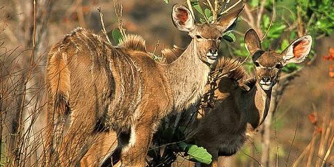 3-Day Northern Tanzania Safari