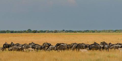 5-Day Hadzabe Bushmen Trekking Lake Eyasi & Ngorongoro