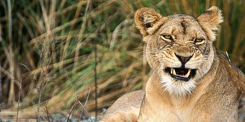 7-Day Value for Money Botswana Safari