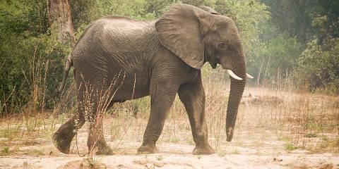 11-Day Zambia & Malawi | Falls, Safari & Lake | Fly-in