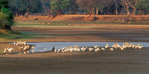 4-Day Luangwa Bush Break
