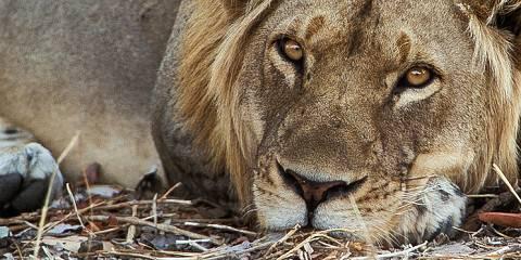 4-Day Tarangire, Serengeti & Ngorongoro - Camping Safari
