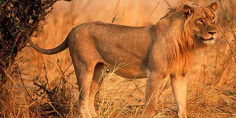 3-Day Kruger National Park Self-Drive Safari