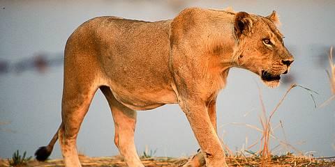 15-Day Zambia Highlights Lodge Safari
