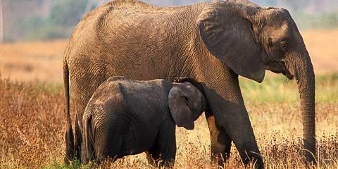 12-Day Taste of Northern Tanzania Safari and Zanzibar