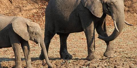 7-Day Botswana Adventurer Camping Safari