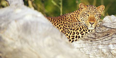 3-Day Affordable Family Kruger Wildlife Safari