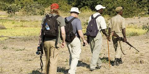 8-Day Luangwa Safari & Walking Combo