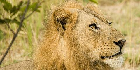 4-Day Classic Kruger Wildlife Safari
