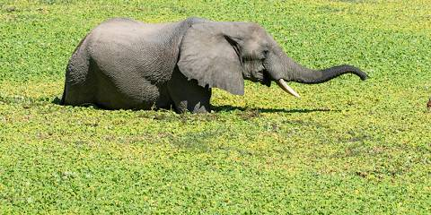 3-Day Marula Safari - Lower Zambezi