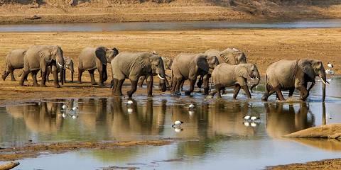 4-Day Full Game Drive South Luangwa National Park Safari