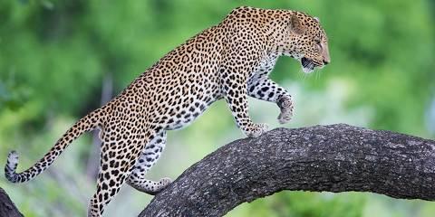 3-Day Marula Safari - Lower Zambezi