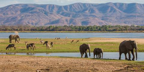 5-Day Classic Hwange National Park