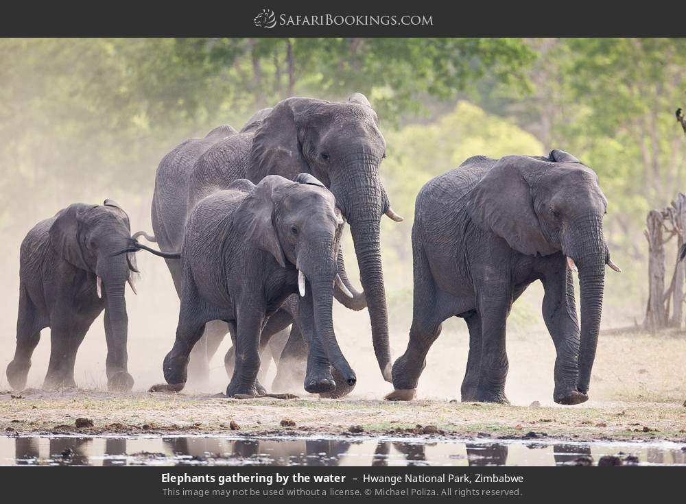 Elephants gathering by the water in Hwange National Park, Zimbabwe