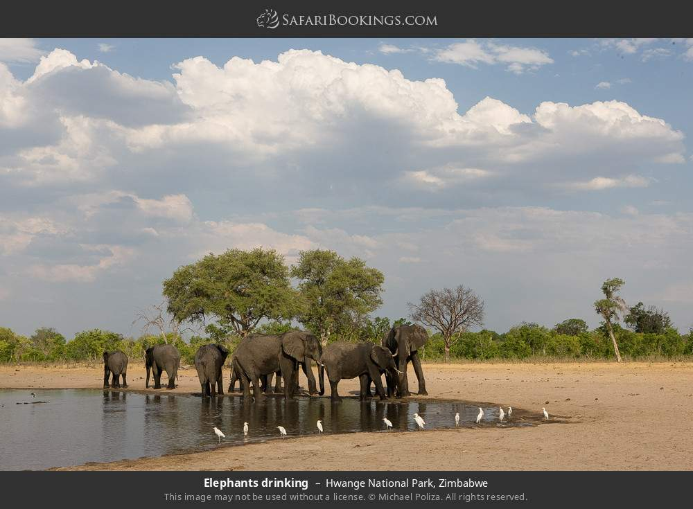 Elephants drinking in Hwange National Park, Zimbabwe