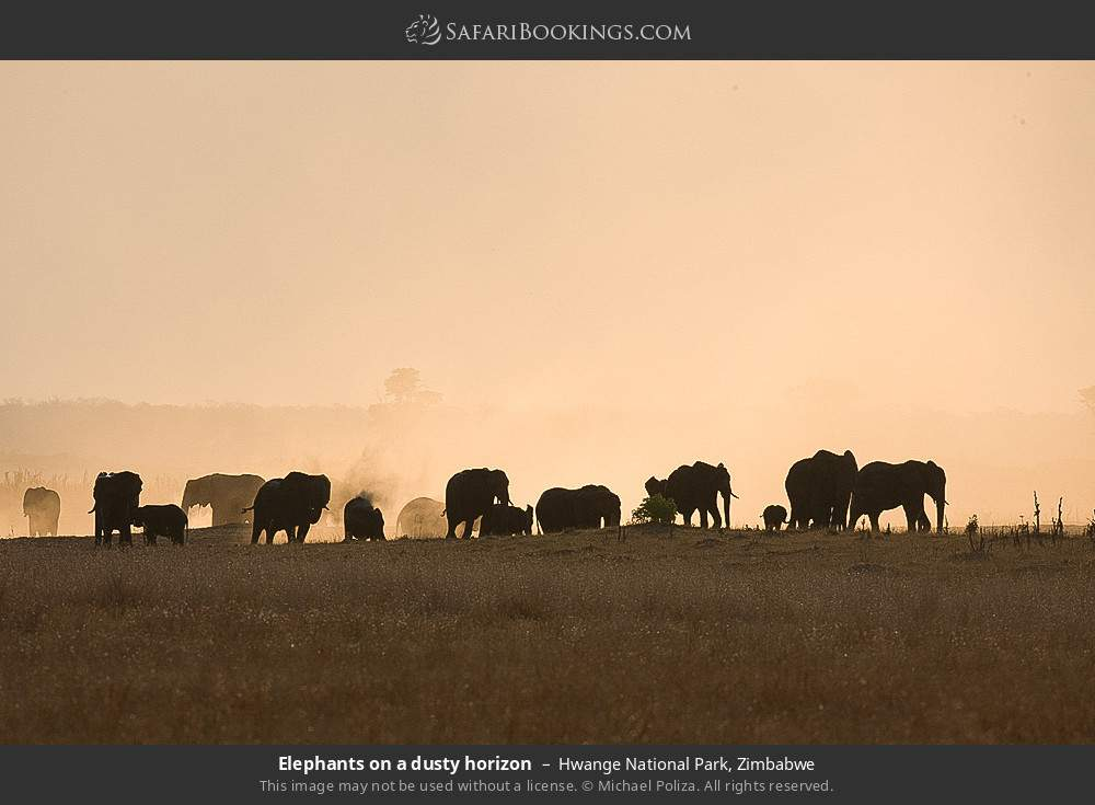 Elephants on a dusty horizon in Hwange National Park, Zimbabwe