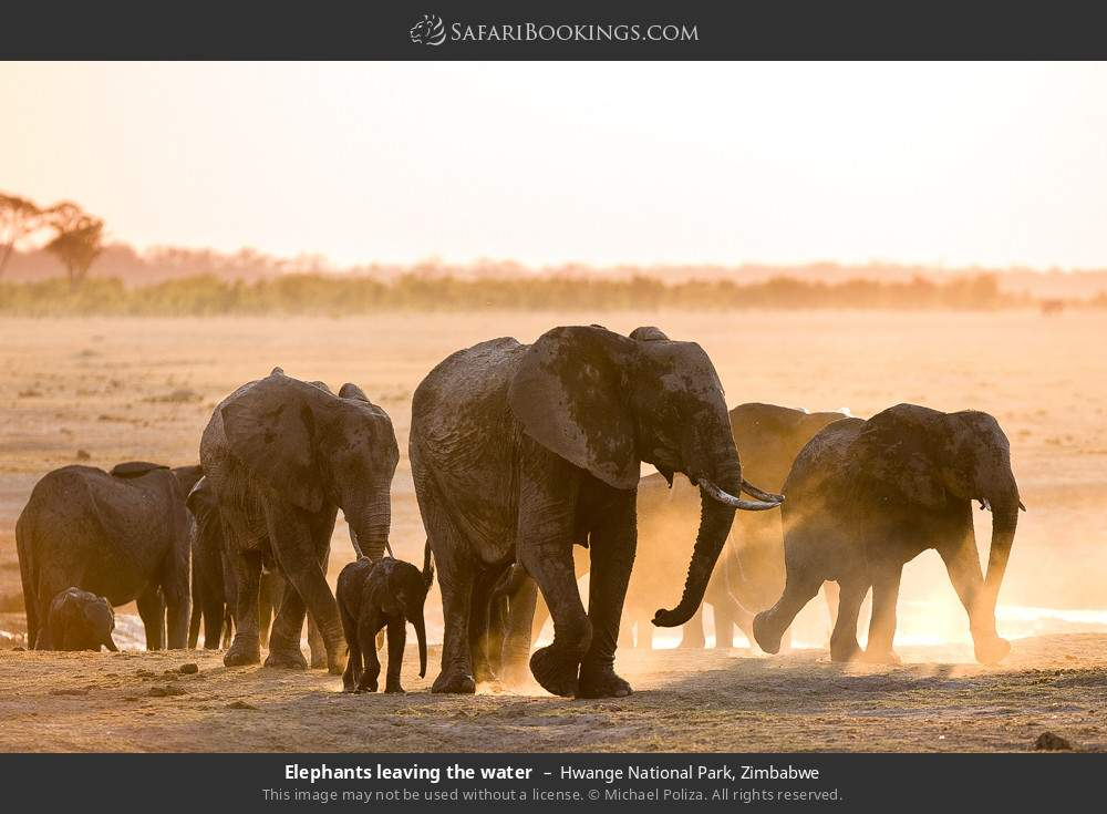 Elephants leaving the water in Hwange National Park, Zimbabwe