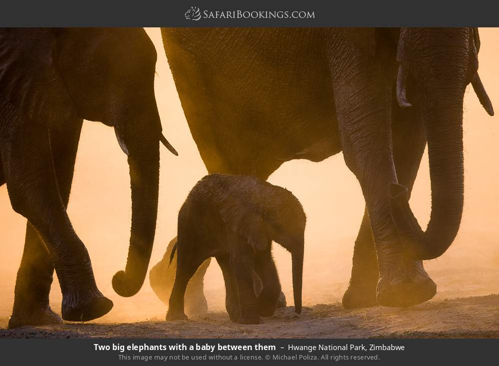 Two big elephants with a baby between them in Hwange National Park, Zimbabwe