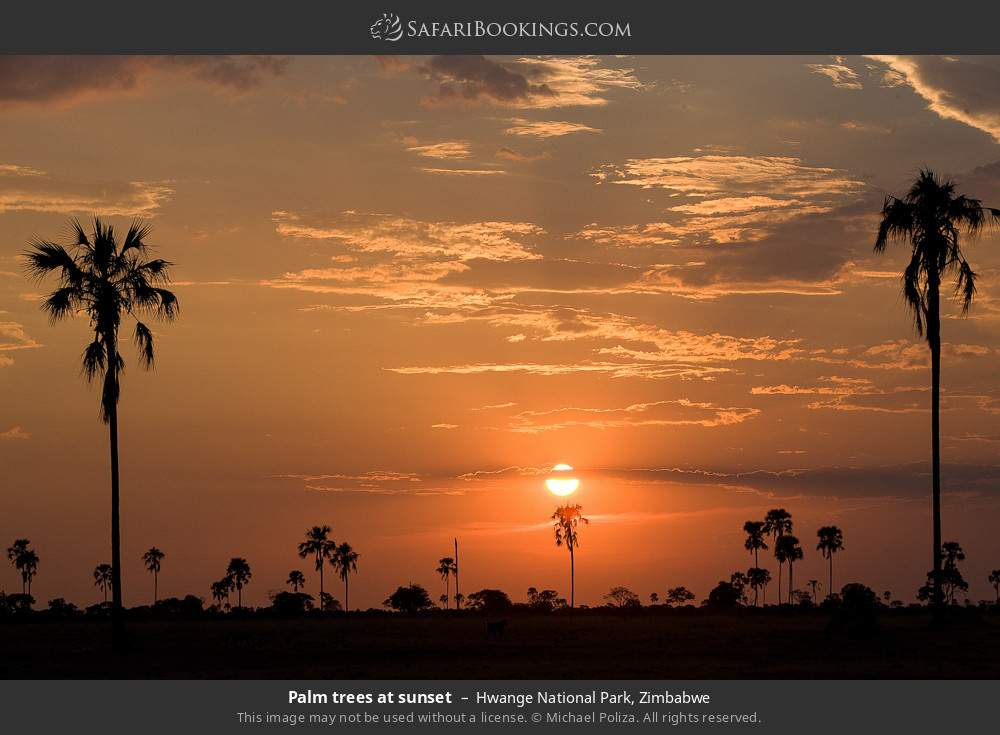 Palm trees at sunset in Hwange National Park, Zimbabwe