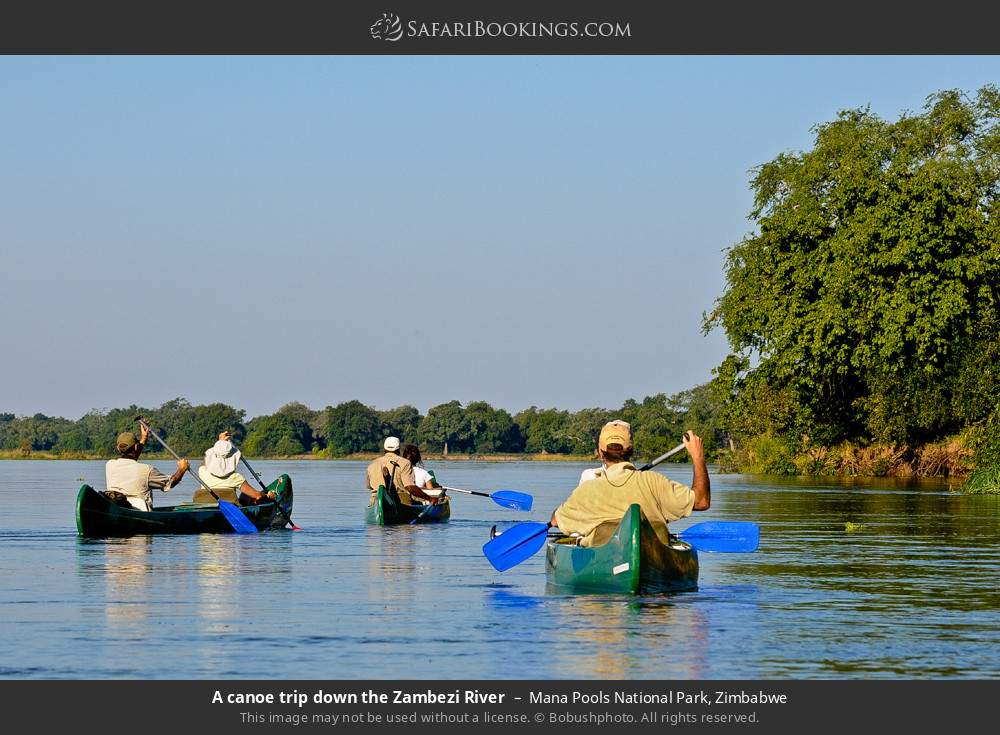 A canoe trip down the Zambezi River in Mana Pools National Park, Zimbabwe