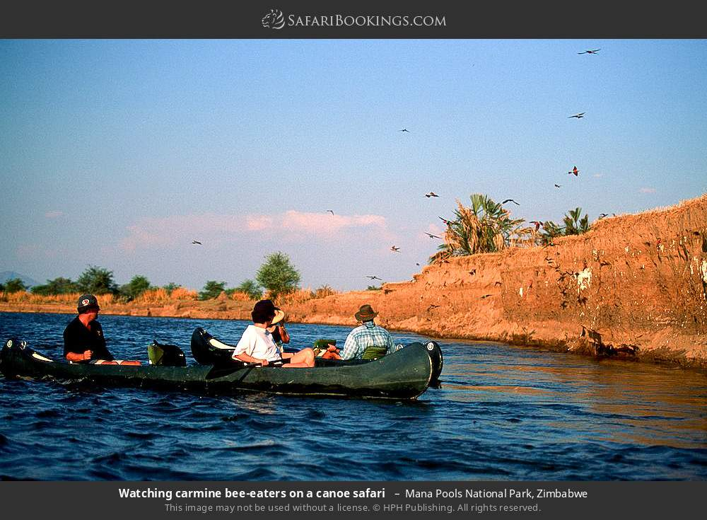 Watching carmine bee-eaters on a canoe safari  in Mana Pools National Park, Zimbabwe