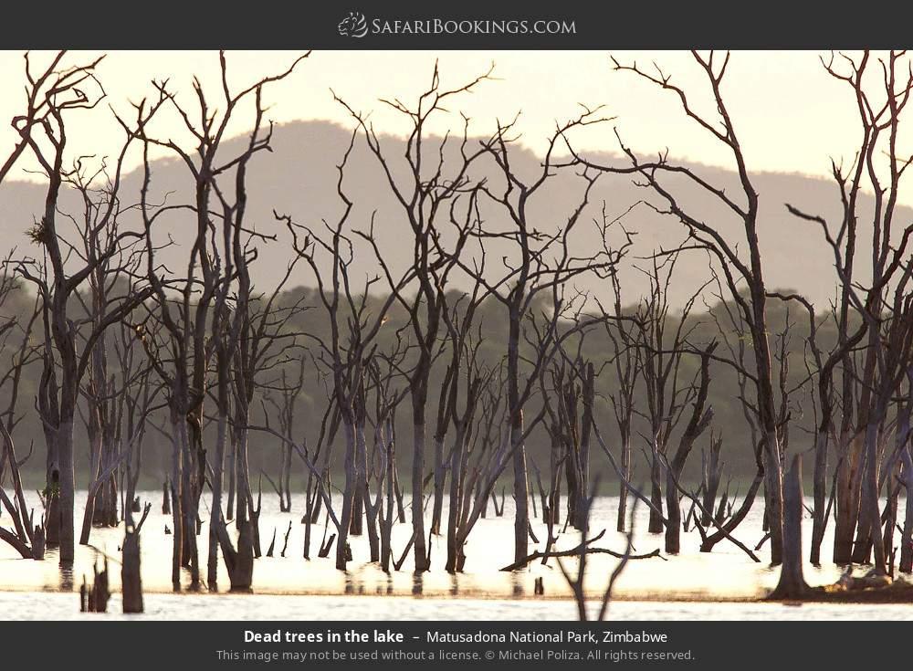 Dead trees in the lake in Matusadona National Park, Zimbabwe