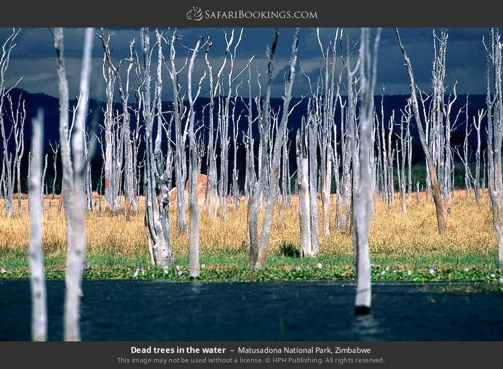 Dead trees in the water in Matusadona National Park, Zimbabwe