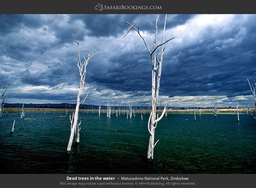Dead trees in the water in Matusadona National Park, Zimbabwe