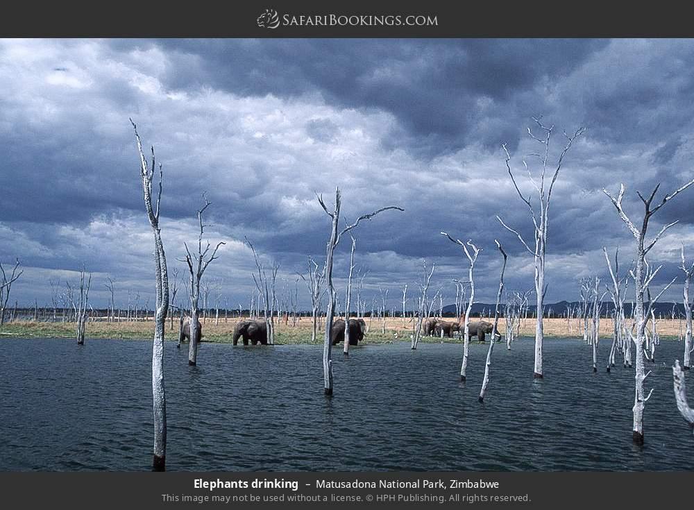 Elephants drinking in Matusadona National Park, Zimbabwe