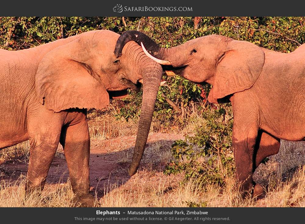 Elephants in Matusadona National Park, Zimbabwe