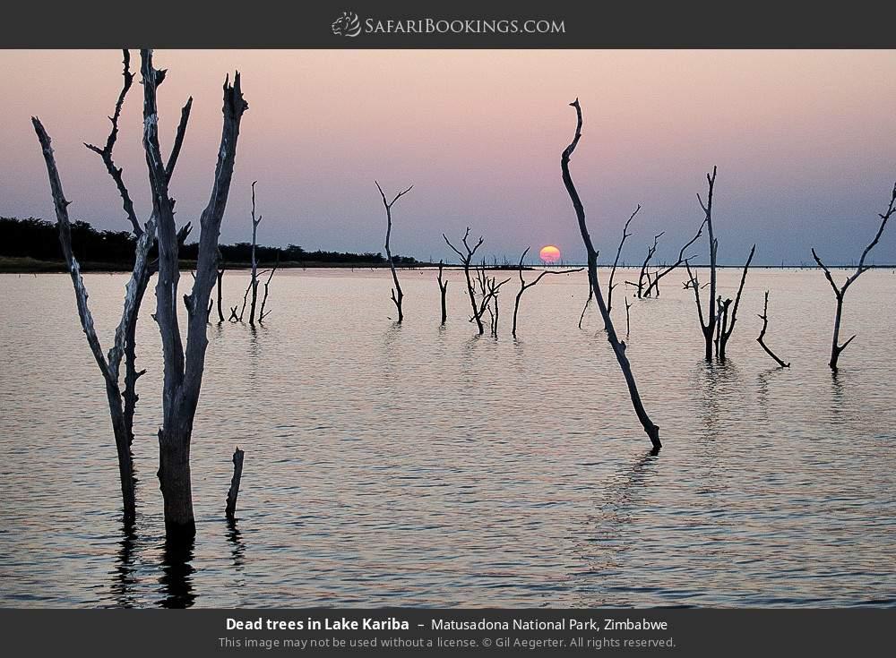 Dead trees in Lake Kariba in Matusadona National Park, Zimbabwe