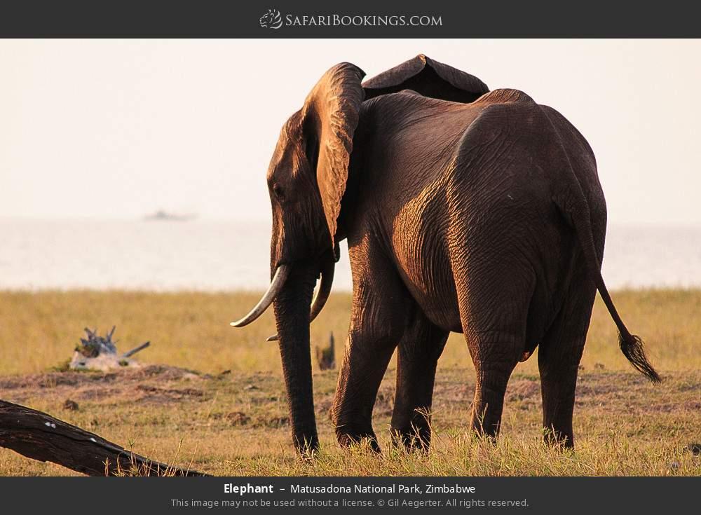 Elephant in Matusadona National Park, Zimbabwe