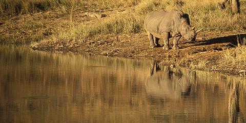 1-Day Safari Trip to Hwange National Park