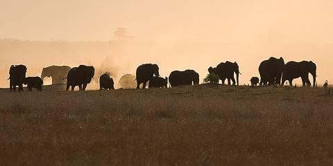 5-Day Kruger Park Lodge Safari