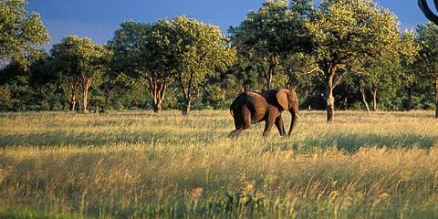 7-Day Zimbabwe Luxury Safari 6 Nights Fly In