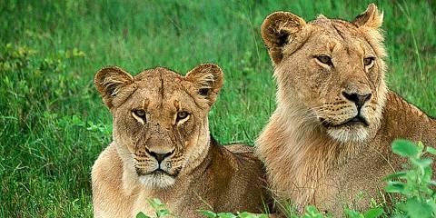 4-Day Hwange National Park Safari + Victoria Falls Combo